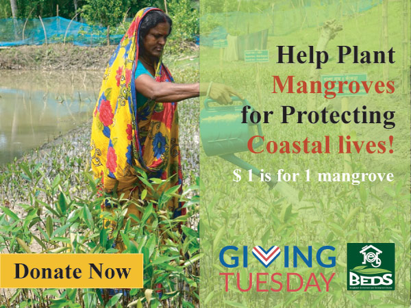 Help plant Mangroves for protecting coastal lives !